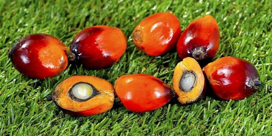 Fra miti e scienza: l'olio di palma fa male?